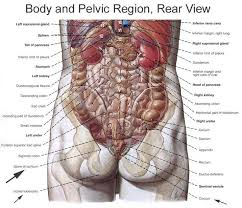 Right Side Human Anatomy Picture Of Human Anatomy Periodic Tables
