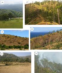 How Do The Eastern Lowlands Differ From The Interior Lowlands Savannas Of Asia Philosophical Transactions Of The Royal Society