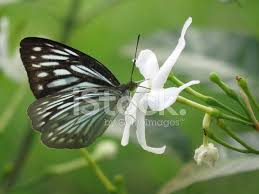 butterfly with flower 2 stock photos freeimages com