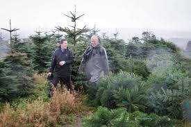 christmas tree industry in ireland is roaring u2013 the irish sun