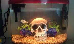 human skull aquarium ornament the sea human