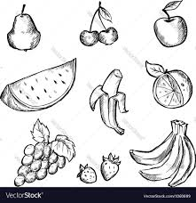 sketch of fruits icon set royalty free vector image