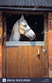 Closing The Barn Door by Bolted Door Horse U0026 It U0027s A Little Bit Like Shutting The Door