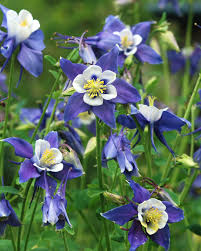 Types Of Planting Flowers - types of purple flowers several flowers with 5 bluish purple