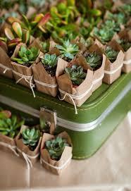 best 25 plant wedding favors best 25 succulent favors ideas on succulent