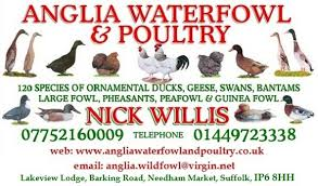 welcome to anglia waterfowl and poultry the leading waterfowl