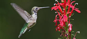 native plants list bird friendly native plants audubon north carolina