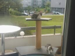 katzennetze balkon katzennetz katzenschutznetz balkon und fenster