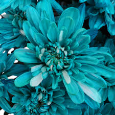 turquoise flowers blue flowers