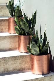 Indoor Planter Pots by Best 25 Fake Plants Ideas On Pinterest Hanging Terrarium