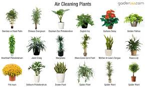 Best Plants For Air Quality | best air cleaning plants garden365
