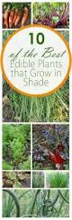gardening tips based on your grow region my garden pinterest