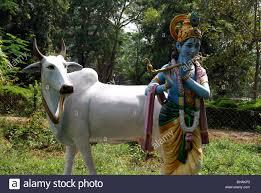 cow in garden the best cow 2017
