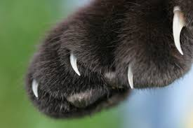 black claws black paw claws care2 healthy living