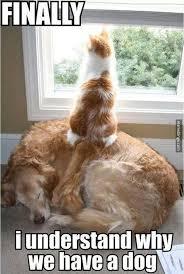 Sleeping Cat Meme - cat puts sleeping dog to use memebinge com finally underst flickr