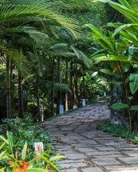 Tropical Backyard Ideas Tropical Garden Pinned By Carmen Hernandez Garden Prettiness