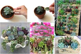 how to plant succulents picture tutorial amazing ideas for