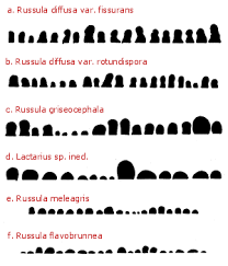 russulales news characteristics of the russuloid fungi