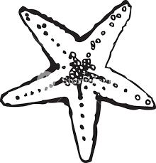 vector sea star royalty free stock image storyblocks