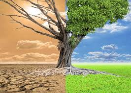 global warming causes and effects essay on causes and effects of global warming for students