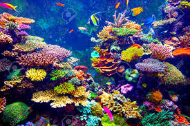 aquarium stock photos royalty free aquarium images and pictures