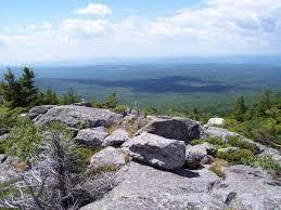New Hampshire vegetaion images Red spruce heath cinquefoil rocky ridge monadnock mountain jpg