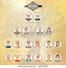 genealogical tree your family family tree stock illustration