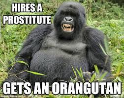 Funny Gorilla Memes - funny sad gorilla sad best of the funny meme