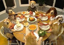 hilarious photo golden retriever celebrates thanksgiving fox