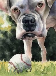 boxer dog art white boxer dog art print print boxers and art