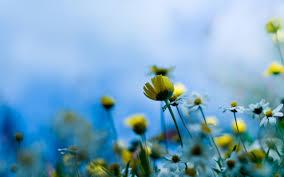wonderful flower wallpaper 3849 2560 x 1600 wallpaperlayer com