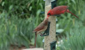 bird feeders u2014 hyde park feed u0026 country store