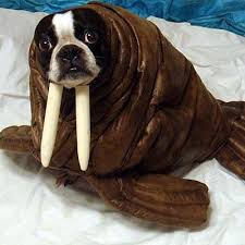 pet costumes 20 best pet costumes images on animal costumes pet