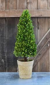 100 cone topiary current catalog u2013 yc nursery boxwood bird