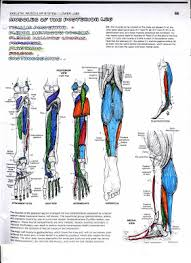 anatomy coloring book pages training your body