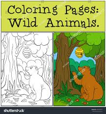 100 brown bear coloring page wild animals colorator net