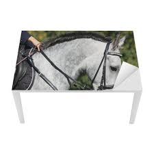 sous cheval bureau papier peint portrait de cheval blanc sous la selle pixers