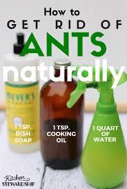 kitchen creative best way to get rid of ants in kitchen room