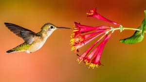how to keep birds away from patio how to create a hummingbird friendly yard audubon