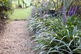 20 plants for dry shade gardenersworld com