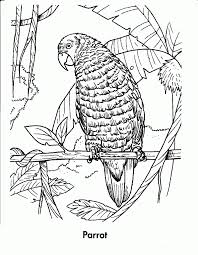 rainforest animals coloring pages free coloring home