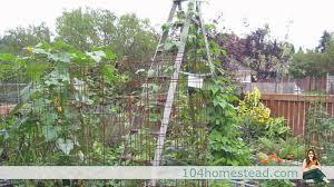 low cost u0026 no cost garden trellis ideas