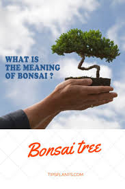 what is the meaning of bonsai