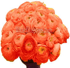 Ranunculus Flower Bulk Ranunculus Flower Ranunculus Flower Delivery Wholesale