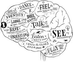 Which Part Of The Brain Consists Of Two Hemispheres Best 20 Brain Lobes And Functions Ideas On Pinterest Function