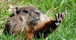 will spring come early ask us not the groundhog farmers u0027 almanac