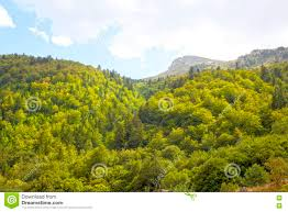 forest of different types of trees stock photo image 78109592
