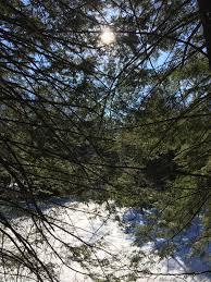 cool trees copeland forest slippery u0026 wet u2013 camperchristina com