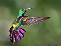 cute small bird colorful hummingbird fly wallpaper hd