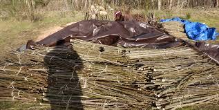 native plant restoration sandy river delta restoration sandy river basin watershed council